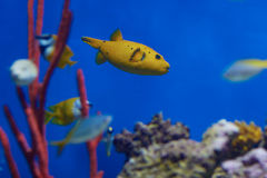 Some types of. Exotic fishes in aquarium Stock Photography