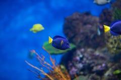 Some types of. Exotic fishes in aquarium Stock Images
