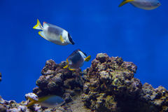 Some types of. Exotic fishes in aquarium Royalty Free Stock Photos