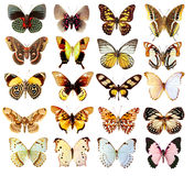 Some various butterflies isolated Royalty Free Stock Photos