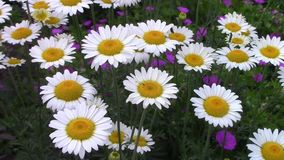 Some various colourful flowers. In summer stock footage
