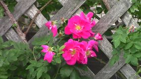 Some various colourful flowers stock footage