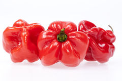Some vegetable of red chili pepper habanero isolated on white ba. Ckground Stock Photography