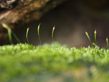 Some very small mosses. Under a stone Royalty Free Stock Photo