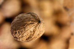 Some walnuts background,close up. Fall,Some walnuts background,close up stock photos