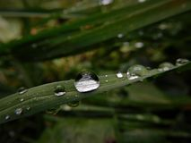 Some waterdrops on stem of grass created after raining. Those waterdrops was created from raining day and next day i going photographing them. It is fascinate Royalty Free Stock Photos