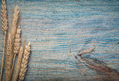 Some wheat rye ears on vintage wooden board copy space.  royalty free stock photography