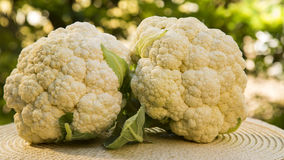 Some white cauliflowers over a wooden surface seen from above. Fresh vegetable Stock Images