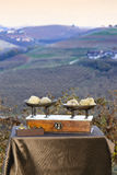 Some white truffles on the scales. Some white truffles on the vintage scales, in the background hills with vineyards in autumn Langhe Piedmont Italy Stock Photos