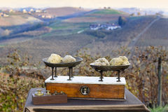 Some white truffles on the scales. Some white truffles on the vintage scales, in the background hills with vineyards in autumn Langhe Piedmont Italy Stock Image