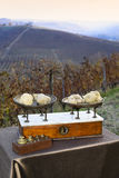 Some white truffles on the scales. Some white truffles on the vintage scales, in the background hills with vineyards in autumn Langhe Piedmont Italy Royalty Free Stock Photography