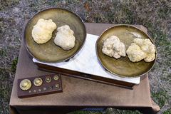 Some white truffles on the scales. Some white truffles on the vintage scales, viewed from above Stock Photos