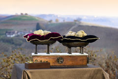 Some white truffles on the vintage scales with red pillows. On background hills with vineyards in autumn Langhe Piedmont Italy royalty free stock photography