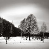 Some winter trees under wind Royalty Free Stock Images