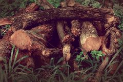 Some woods. Some wood set on grass. there are difference kinds of wood pice royalty free stock photography