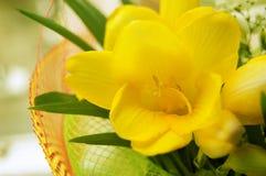 Some yellow freesias. Bouquet of some yellow freesias stock photo