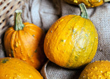 Some yellow Gourds. In a crate as a close up stock image