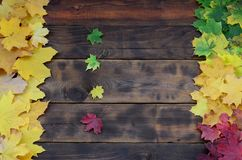 Some of the yellowing fallen autumn leaves of different colors on the background surface of natural wooden boards of dark brown c. Olor stock image