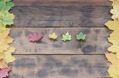 Some of the yellowing fallen autumn leaves of different colors on the background surface of natural wooden boards of dark brown. Color stock photography