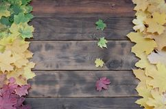 Some of the yellowing fallen autumn leaves of different colors on the background surface of natural wooden boards of dark brown. Color royalty free stock photos