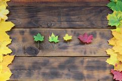 Some of the yellowing fallen autumn leaves of different colors on the background surface of natural wooden boards of dark brown c. Olor Stock Photography