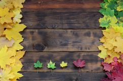 Some of the yellowing fallen autumn leaves of different colors on the background surface of natural wooden boards of dark brown c. Olor royalty free stock image