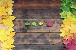 Some of the yellowing fallen autumn leaves of different colors on the background surface of natural wooden boards of dark brown c Royalty Free Stock Photo
