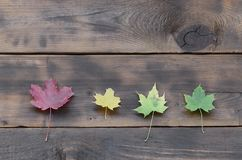 Some of the yellowing fallen autumn leaves of different colors o. N the background surface of natural wooden boards of dark brown color royalty free stock images