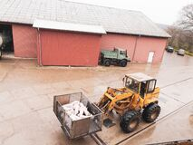 Some young pigs are transferred with a wheel loader in a pig farm