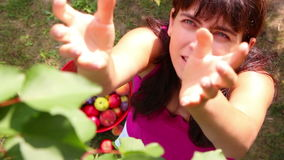 Somebody in branches of a tree picking apples and throwing them to a woman stock video