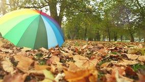 Somebody lost a multicolored umbrella in autumn park stock footage