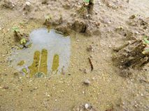 Somebody`s hidden hand in a shallow pool of water in sand. The sand in some playground can hidden some shallow pool who can create some figure for you stock photos