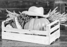Somente as melhores frutas e legumes Alimento natural org?nico Halloween compra no mercado Produto saud?vel colheita foto de stock