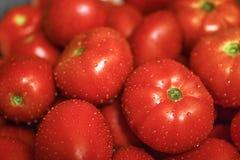 Somente os tomaotoes os mais frescos imagens de stock