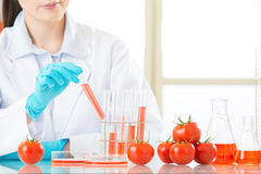 Someone don't like genetic modification food. Doesn't mean it's all bad Royalty Free Stock Image
