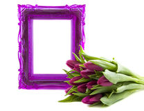For someone special. Purple ornament frame with purple tulips isolated over white Stock Photography