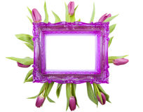 For someone special. Purple picture frame with purple tulips isolated over white Royalty Free Stock Photo