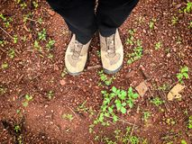 Someone standing on the land , show shoes and legs. On the ground royalty free stock images