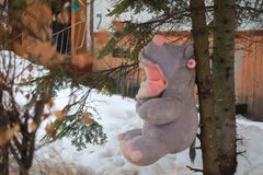 Teddy hippo nailed to spruce stock image