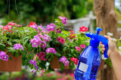 Someone watering flowers. In the garden Royalty Free Stock Images