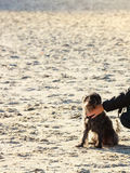 Someone wręcza migdalić psa na plaży Zdjęcia Royalty Free