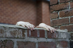 Someones hands gripping on to the top of a wall Royalty Free Stock Images