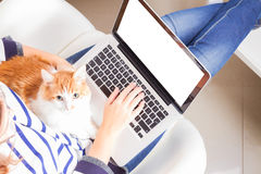 Someones hands and latop. Someones sitting on chair and using laptop with cat on the lap, copy space on empty screen stock image