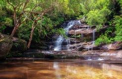 Somersby秋天, NSW,澳大利亚 库存图片