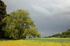 Somerset Countryside Stockfoto