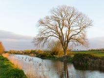 Somerset kanal Bridgwater och Taunton västra England UK arkivbild