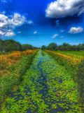 Somerset Levels. Quiet day by the river royalty free stock photography