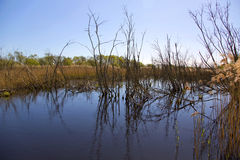 Somerset wildlife wetlands reserve Stock Photography