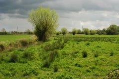 Somersetmoerasland stock fotografie