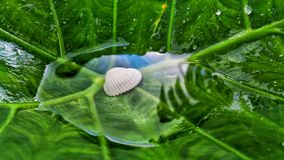 Something different. Shell in a leaf .Something for the naturelovers Stock Image